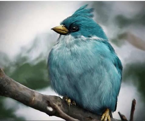 پرنده آبی انگری بردز