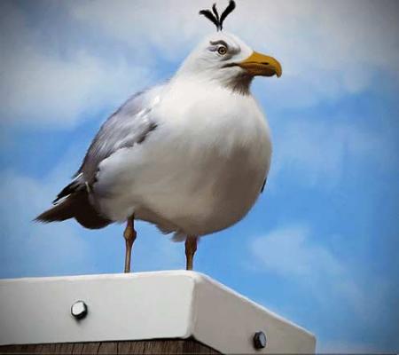 پرنده سفید انگری بردز
